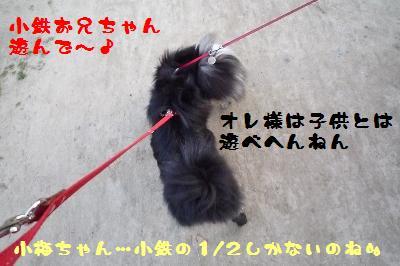 コタウメちゃんと散歩3