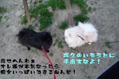 コタウメちゃんと散歩4