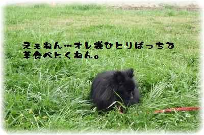 平城宮跡もふ会6