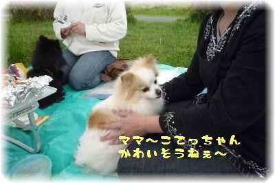 平城宮跡もふ会7