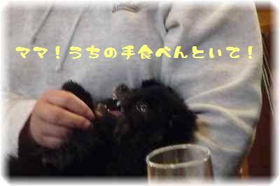 もふ会カフェ7