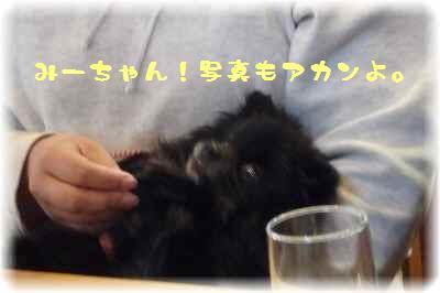もふ会カフェ8