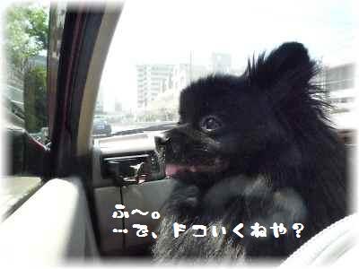 安全運転3