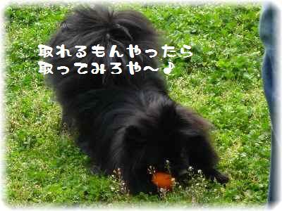 大泉緑地-10