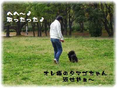 大泉緑地-11