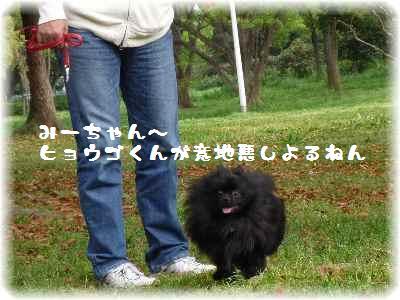 大泉緑地-12