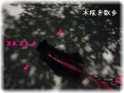 大泉緑地2