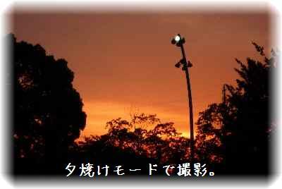一緒に鶴見緑地6