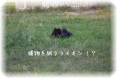 みーちゃん誕生日7