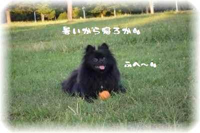 みーちゃん誕生日9