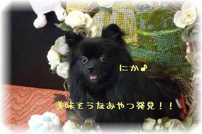 菜々ちゃん&寧々ちゃん6