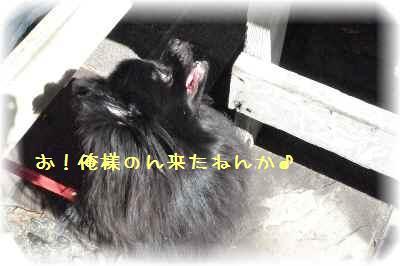 石釜ピザ9