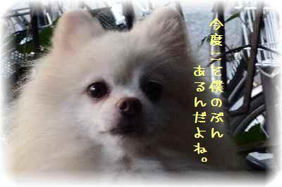 〆は甘味5