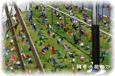 水都大阪2009-6