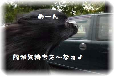 ハコ乗り犬1