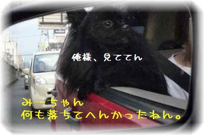 ハコ乗り犬4