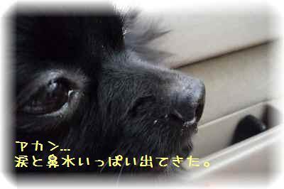 ハコ乗り犬7