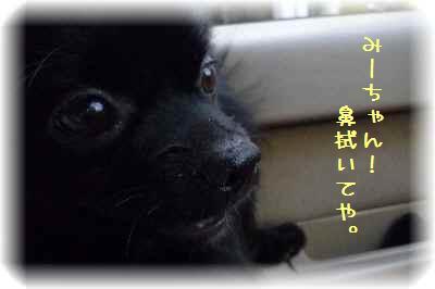 ハコ乗り犬9