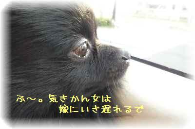 ハコ乗り犬10