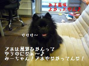P1010084_.jpg