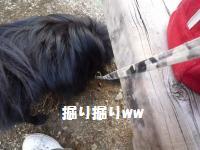 P1010113_convert_20081127030520.jpg