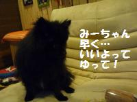 P1010121_convert_20081127031139.jpg