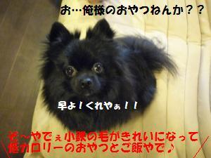 P1010138_convert_20081129234807.jpg