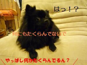 P1010149_convert_20081201022357.jpg
