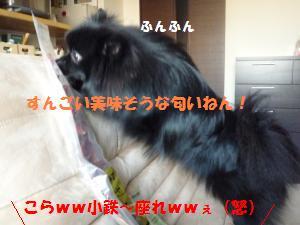 P1010157_convert_20081203021717.jpg