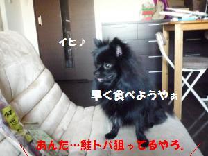 P1010159_convert_20081203021816.jpg