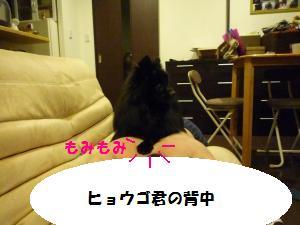 P1010172_convert_20081206003946.jpg