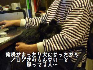 P1010209_convert_20081217033710.jpg