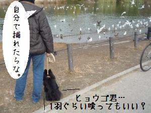 P1010289_convert_20081222145119.jpg