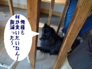 P1010293_convert_20081222145349.jpg