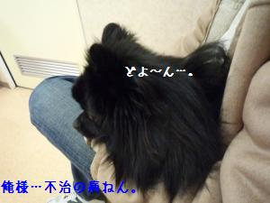 P1010375_convert_20090106070605.jpg