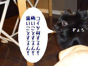 P1010426_convert_20090117182531.jpg
