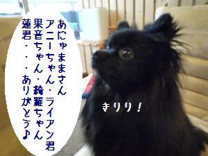 P1010434_convert_20090117182904.jpg