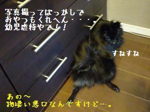 P1010451_convert_20090117183440.jpg
