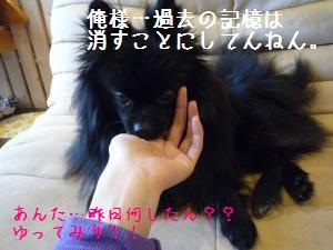 P1010460_convert_20090123005521.jpg