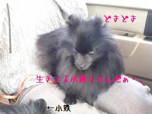 P1010502_convert_20090126203753.jpg