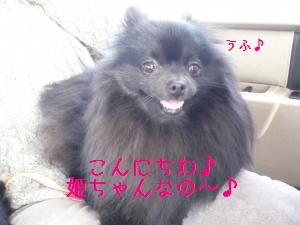 P1010503_convert_20090126203826.jpg
