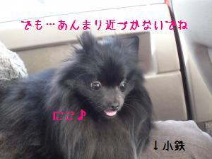 P1010505_convert_20090126203857.jpg