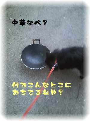 PAP_0000(1)(1).jpg