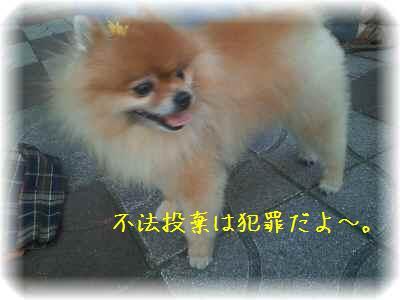 PAP_0029(1).jpg