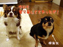 20061129203611.jpg