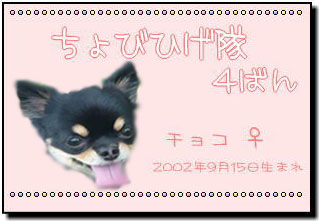 chobihige4のコピー
