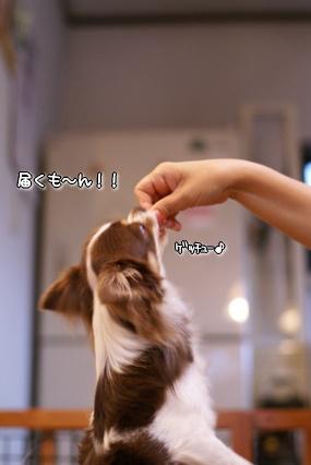 コピー ~ 画像 011