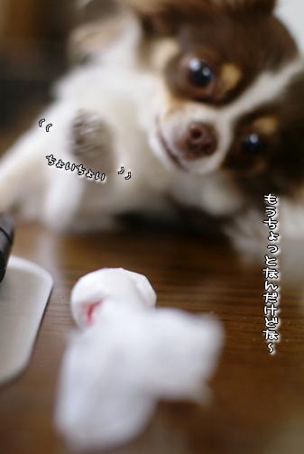 コピー ~ 画像 043