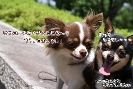 コピー ~ DSC08009