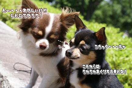 コピー ~ DSC08011